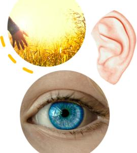 Die 3 Hauptsinneskanäle Auge, Ohr und Haut